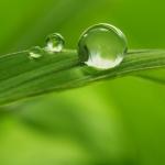 رایحههای سبز